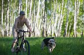stock photo of alsatian  - 50 years old woman at bicycle with alsatian dog - JPG