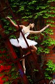 picture of ballet-dancer  - beautiful ballerina dance ballet dance - JPG