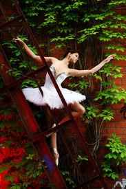 picture of ballet dancer  - beautiful ballerina dance ballet dance - JPG