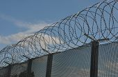 Razor wire with fence