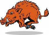 picture of razorback  - Vector art of a wild boar isolated on white background - JPG