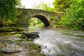 stock photo of irish moss  - Beautiful creek of Clare Glens - JPG