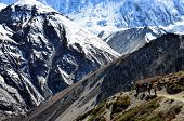 stock photo of sherpa  - Group of mountain trekkers backpacking in Himalayas mountains Nepal - JPG
