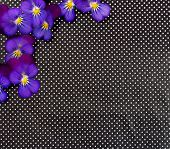 floral and optical illusion background