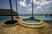 Dominicana Pool Tree Palm  Peace