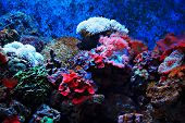 Tropical Seaweed And Corals