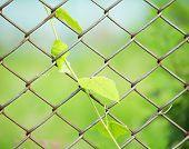 Cerca del acoplamiento de cadena con la planta fresca