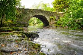 picture of irish moss  - Beautiful creek of Clare Glens - JPG