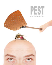 picture of gnat  - Smashing flyswatter over a sucking mosquito on a men - JPG