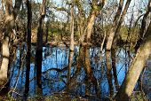 Scenic Swamp Reflections