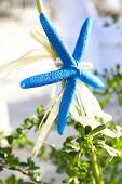 wedding decoration starfish, tropical wedding ceremony details