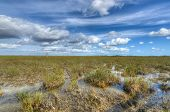 picture of marshlands  - Scenic landscape in the Florida Everglades National Park during the winter - JPG