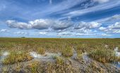 picture of marsh grass  - Scenic landscape in the Florida Everglades National Park during the winter - JPG
