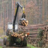 The harvester working in a forest.