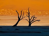 Dead Trees In Sossusvlei