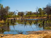 Landscape At Okavango River