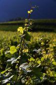 Beautiful vineyard landscape in Provence, France