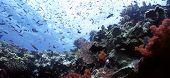 Beqa Shallow Reef