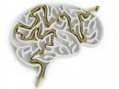 Brain-like Maze