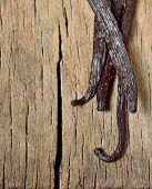 tied vanilla beans isolated on wood