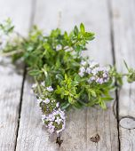 Portion Of Winter Savory
