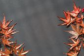 Plate Surface With Red Maple Leaves