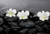 Three white orchid on pebbles �¢�?�?wet background