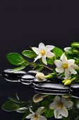 Branch gardenia flower with leaves on pebbles