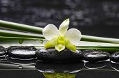 Still life with white orchid with green plant on black stones