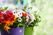 Bouquet of colorful flowers in decorative buckets, on chair, on bright background
