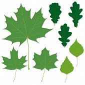 Set of eight vector green leaves for your design