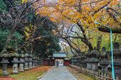 Stone Lanterns on the way to Toshogu Shrine at Ueno Park in Tokyo