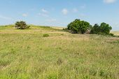 pic of tallgrass  - Prairie farm on a sunny day Strong City Kansas
