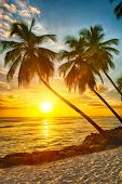stock photo of vegetation  - Beautiful sunset over the sea with a view at palms on the white beach on a Caribbean island of Barbados - JPG