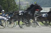 harness race-3
