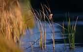 foto of marsh grass  - Marsh Grass at Huntington Beach State Park - JPG