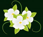 Bouquet of three white flowers
