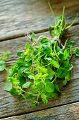 picture of oregano  - oregano on a dark wood background - JPG
