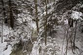 picture of blanket snow  - Wilderness stream and forest blanketed in fresh fallen snow - JPG