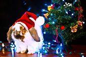 Christmas Conceptual Image.