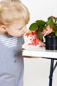 foto of schlumbergera  - portrait of little with Christmas cactus - JPG