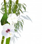 illustration with white flowers and green bamboo