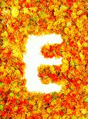 stock photo of initials  - Initials letter E - JPG