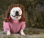 funny dog wearing wig female clothes on green background