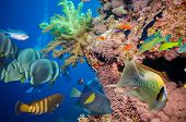 stock photo of fire coral  - Colorful underwater offshore rocky reef with coral and sponges and small tropical fish swimming by in a blue ocean - JPG