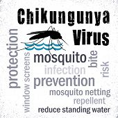foto of mosquito  - Chikungunya Virus word cloud collage - JPG
