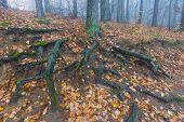 stock photo of spooky  - Foggy spooky forest landscape - JPG
