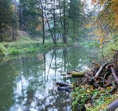 stock photo of beaver  - Beautiful wild river photographed in autumn - JPG