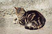 stock photo of sleepy  - Beautiful sleepy gray striped cat is sleeping outdoors - JPG