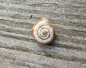 stock photo of shells  - Shell on the board - JPG